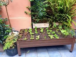 hochbeet balkon hochbeet für balkon selber bauen und bepflanzen 20 tipps