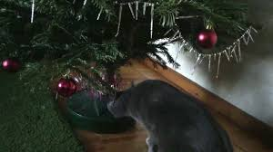 Christmas Tree Store Taylor Michigan - dog drinking christmas tree water rainforest islands ferry