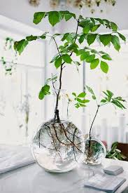 indoor plant display stunning decoration home plants ideas cool house best 25 indoor on