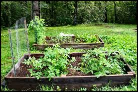 grow your own serendipity life is a garden