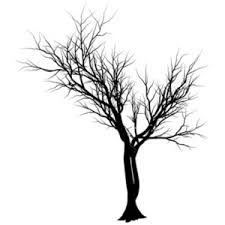 black tree image by court enay on photobucket polyvore