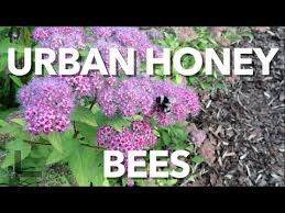 Raising Bees In Backyard by Backyard Honey Bees The Importance To Urban Living In The Alberta