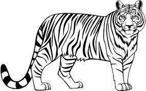 tiger clip arts images free black and white background