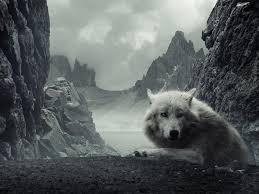 imagenes de fondo de pantalla lobos fondos de pantalla de lobo en montanas wallpapers de lobo en montanas