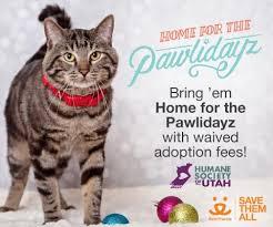 black friday pet adoption home for the pawlidayz humane society of utah