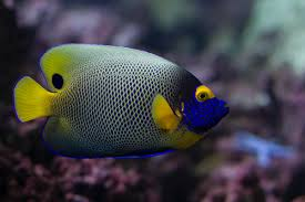 14 most attractive saltwater fish in the sea u2013 wow amazing