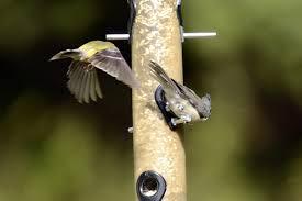 native plant seeds natural history taking flight