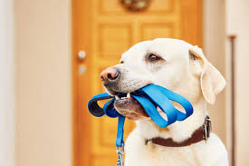 the best places to get pet supplies on the cape