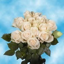 global roses fresh ivory roses global
