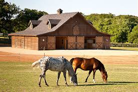 barn pros projects gallery horses pinterest horse horse