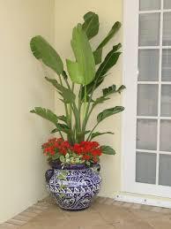 house plants no light bathroom design fabulous small house plants low light bath plant