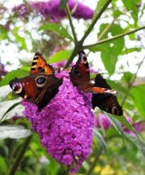 planting a butterfly garden a sacred journey