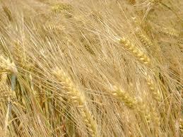 chambre agriculture indre et loire pai de l indre devenir agriculteur en région centre chambre