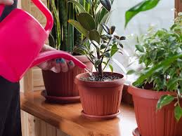 indoor plants images how much to water houseplants expert trick for keeping plants