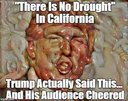 California Meme - pax on both houses in california speech trump says there is no