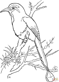 torogoz bird coloring page free printable coloring pages