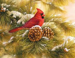 Real Christmas Trees Ipswich December Dawn Cardinal Christmas Cards Christmas Nature