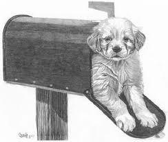 puppy mail pencil sketch