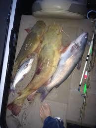 fishing david p roberts