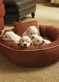 Cute Puppy Beds 607 Best Pampered Pets Images On Pinterest Pet Products Pet