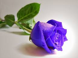 Best Restaurants In Connecticut 2016 Experts U0027 Picks 100 Naturally Blue Flowers The 98 Best Images About Flowers