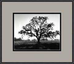 white tree tree ebay