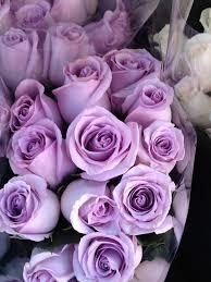 Hues Of Purple The 25 Best Lavender Roses Ideas On Pinterest Purple Roses