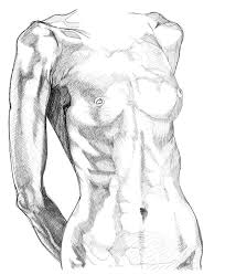 Female Anatomy Video 28 Best Scatches Images On Pinterest Drawings Drawing And