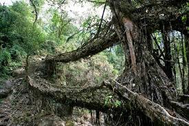 meghalaya u0027s double decker live root bridges