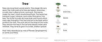 Part Of Flowers - montessori definition cards u2013 tagged