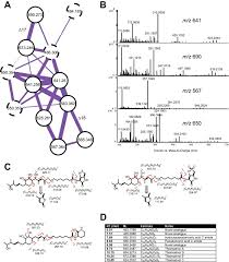 Massachusetts Blank Map by An Integrated Metabolomic And Genomic Mining Workflow To Uncover