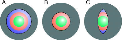 Path Of Light Through The Eye Pupil Shapes And Lens Optics In The Eyes Of Terrestrial
