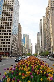 Chicago Magnificent Mile Hotels Map by Magnificent Mile Road In Chicago Thousand Wonders