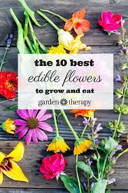 edible photo the ten best edible flowers to grow in your garden