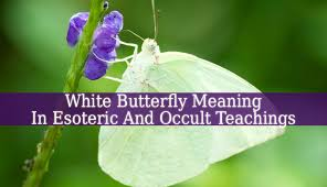 white butterfly meaning a white butterfly can many things