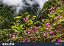 beautiful trek uttarakhand called valley flowers stock photo