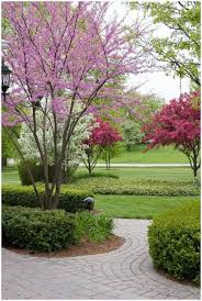 backyards cool trees for small backyards 11 front yard landscape