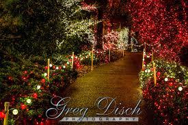 garvan gardens christmas lights 2017 garvan woodland gardens greg disch photography