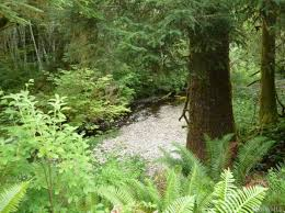 Beaver Homes And Cottages Price List by Beaver Real Estate Beaver Wa Homes For Sale Zillow