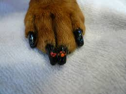 pretty paws the japanese art of dog manicure alice gordenker