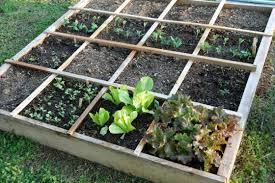 vegetable garden layout rows square foot or wild