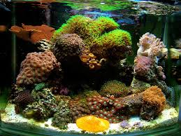 Aquascaping A Reef Tank On The Rocks How To Build A Saltwater Aquarium Reefscape