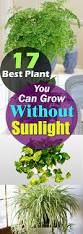 plants that grow without sunlight 17 best plants to grow indoors