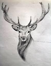drawn dear pencil and in color drawn dear
