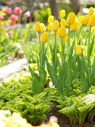 Ideas For Daffodil Varieties Design Designing With Spring Bulbs