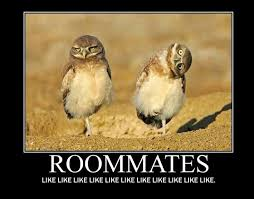 Housemate Meme - funny birthday quotes for roommates funkyfunz my so called