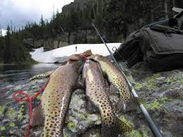 White Mountains Cottage Rentals by The Best Fishing In Arizona Greer Az Cabin Rentals Hotel And