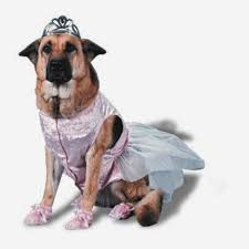 pet halloween costumes uk rules of the jungle when do you need the large dog costumes