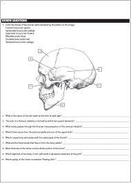 Human Anatomy Pdf Books Free Download Netter U0027s Anatomy Coloring Book Pdf Free Download Direct Link