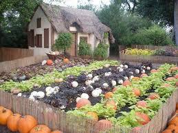 Fall Vegetable Garden Ideas by Best 25 Pumpkin Garden Ideas Only On Pinterest Pumpkin Growing